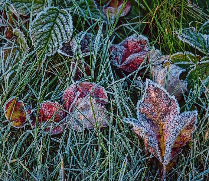 Early morning frost at Long Lake, Acadia National Park