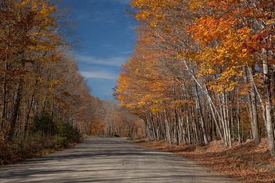 Golden Road, North Maine Woods
