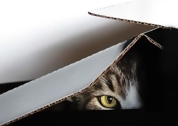 Ikey in a Box