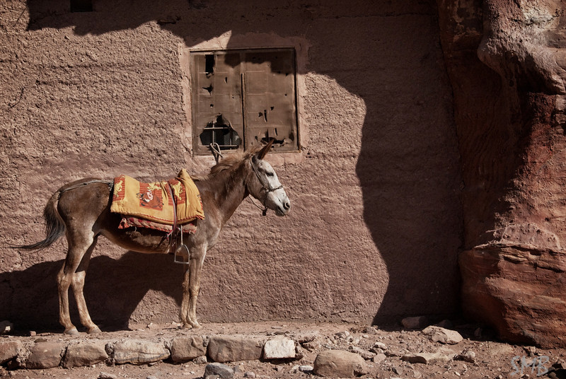 Donkey<br /> Petra, Jordan