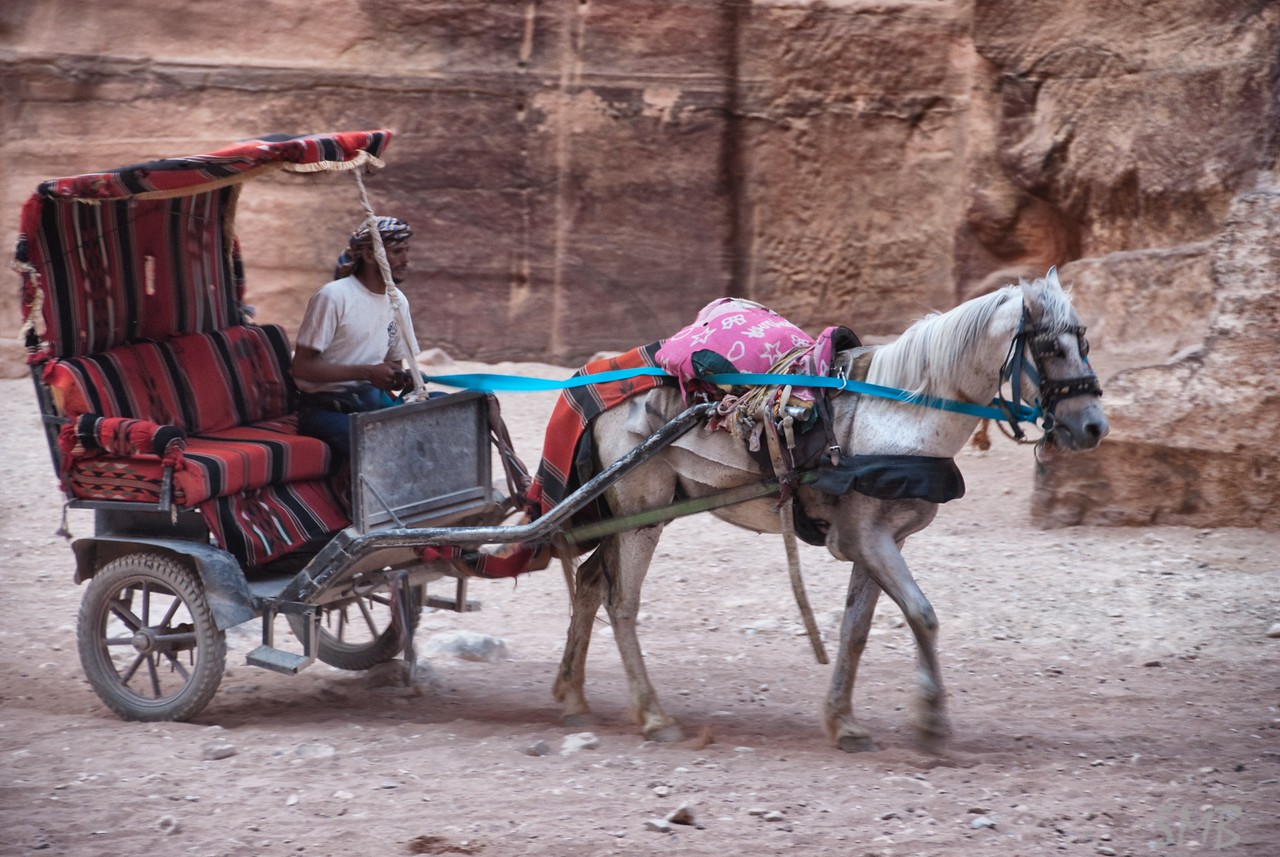 Our horse, carriage, and driver...<br /> <br /> Petra, Jordan