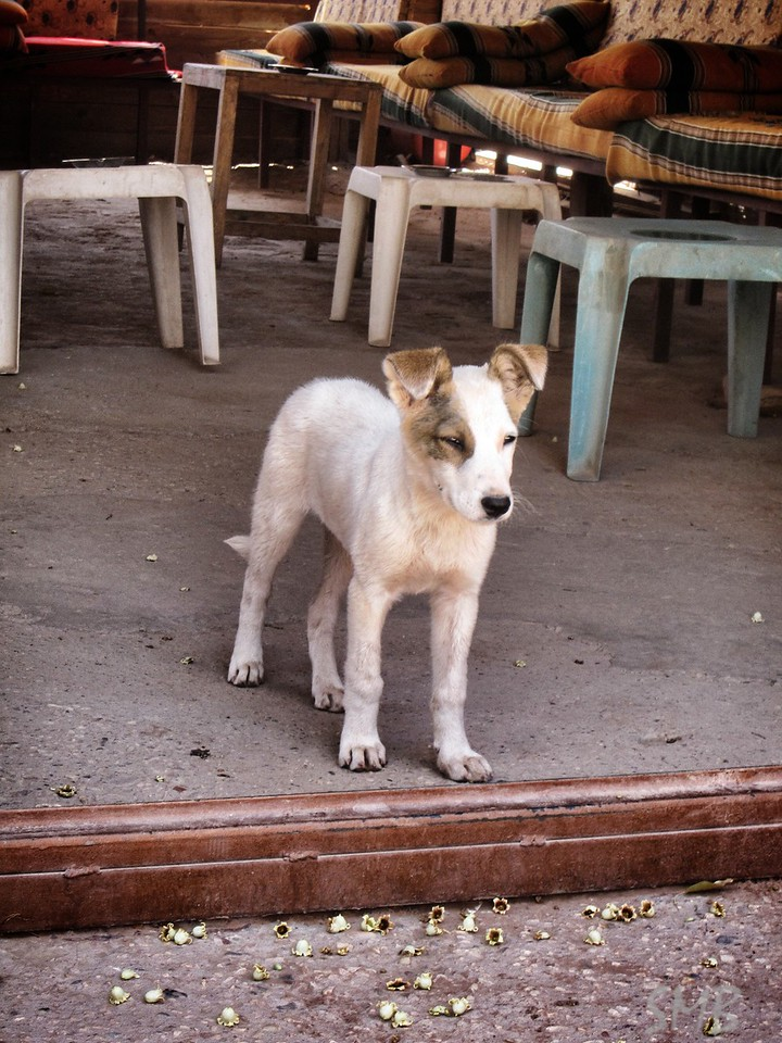 This dog was way too cute and checking out every one who came to the cafe<br /> <br /> Petra, Jordan