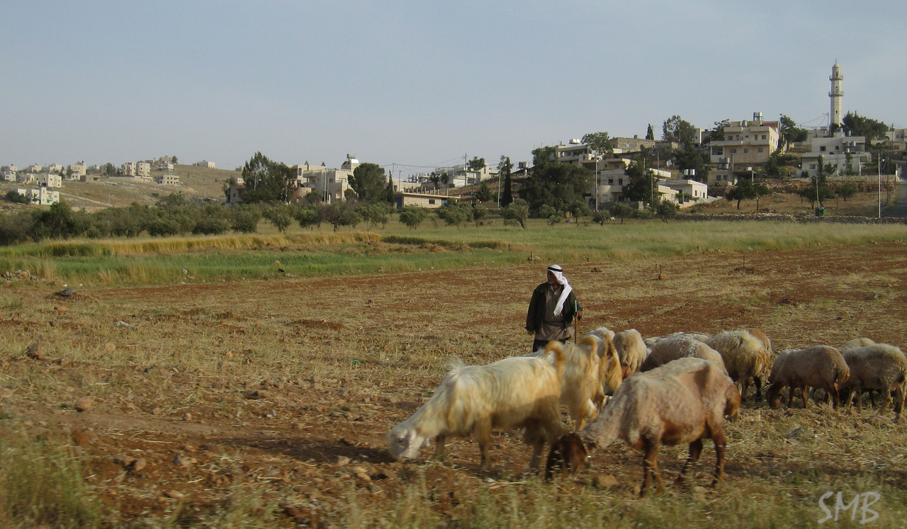 Shepard outside the city<br /> <br /> Bethlehem, Palestine