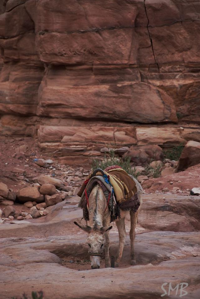 watering hole<br /> Petra, Jordan