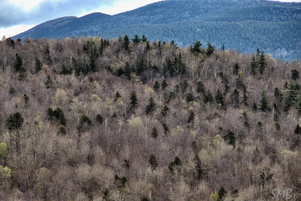 spring is trying to emerge...<br /> <br /> Sunday River, Maine