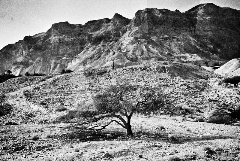 I loved the way the trees formed themselves...<br /> <br /> Near the Dead Sea, Israel