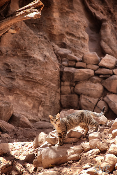 feral cats were everywhere we went on this entire trip<br /> <br /> Petra, Jordan