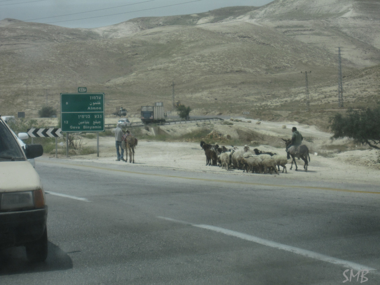herding on the highway<br /> <br /> Palestine