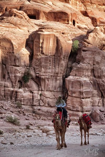 Camels!<br /> Petra, Jordan