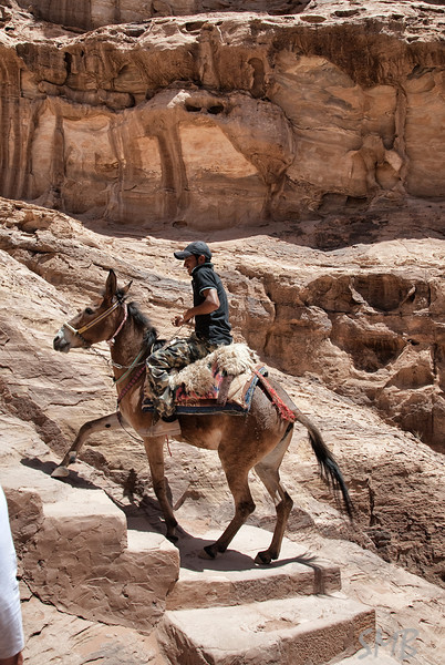 The donkeys that go up and down the stairs are amazing. They all know the best path by heart.<br /> <br /> Petra, Jordan