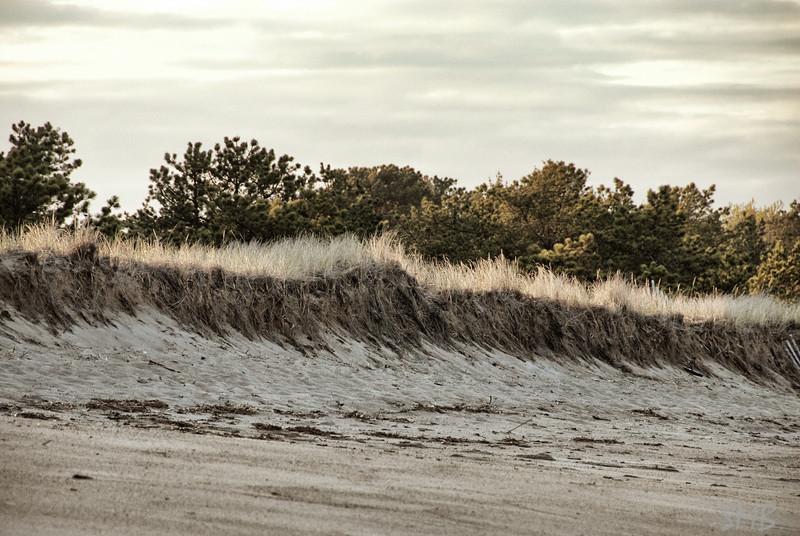 the dunes<br /> <br /> Ferry Beach, Maine