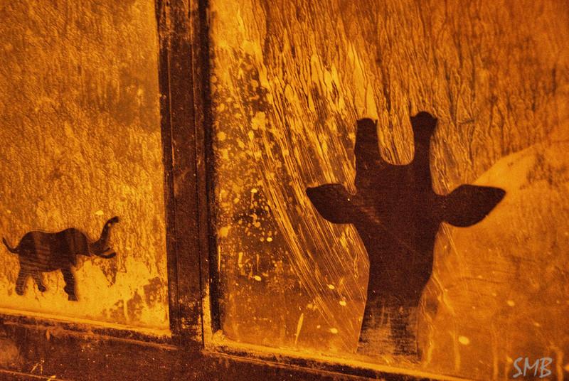 elephant and GIRAFFE<br /> <br /> Jerusalem, Israel
