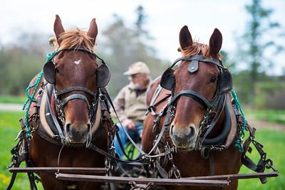 Horsepower Farm Maine