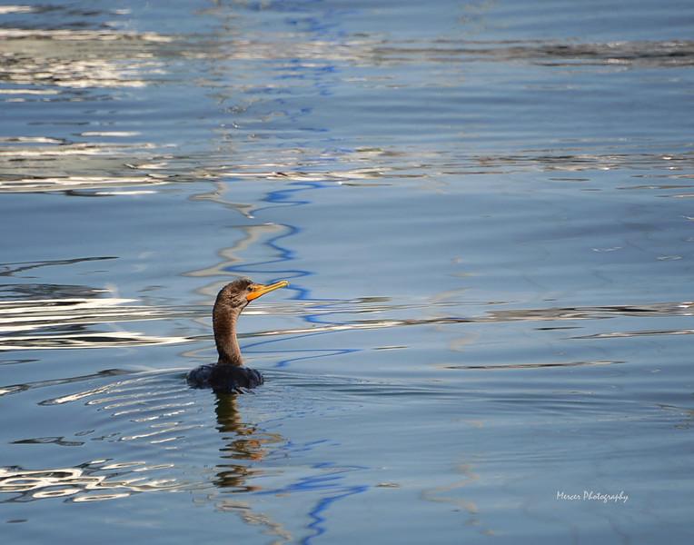 Duck00114x11