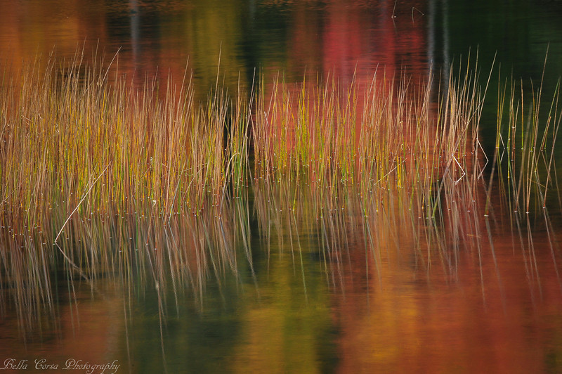 Another favorite...reeds and reflections