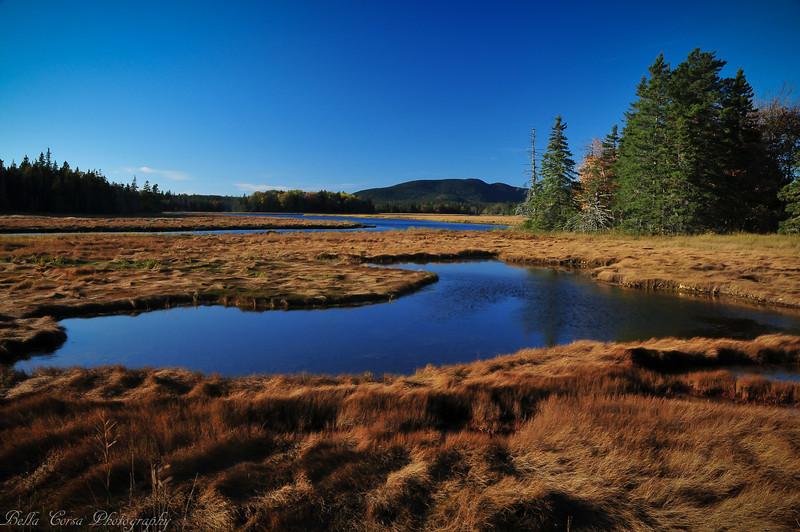 Pretty marsh area