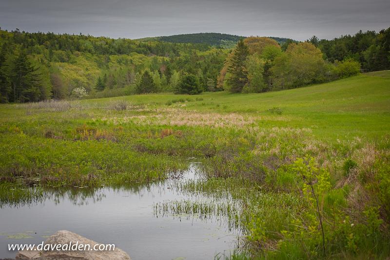 AcadiaNationalPark1-19.jpg