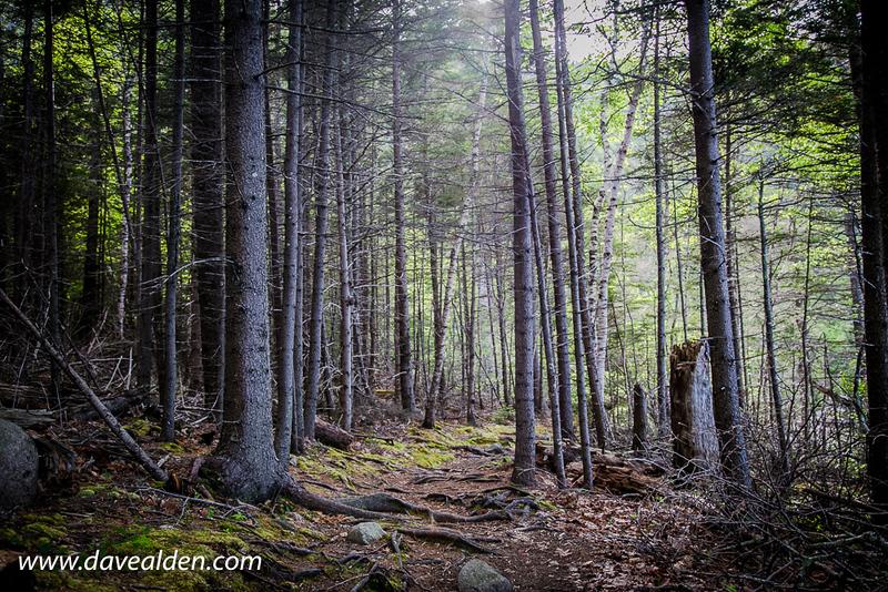 AcadiaNationalPark2-20.jpg