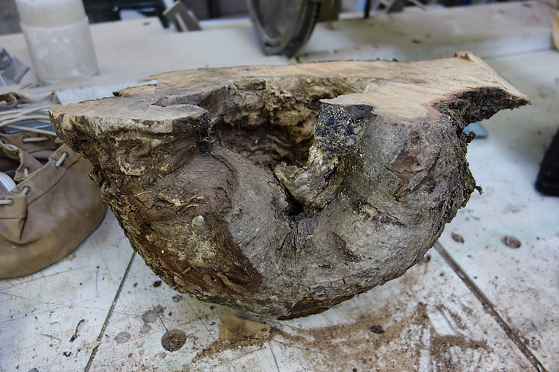 Maple burl uncut 3
