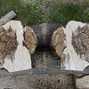Maple burl two pieces