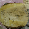 Small Cherry burl uncut 2