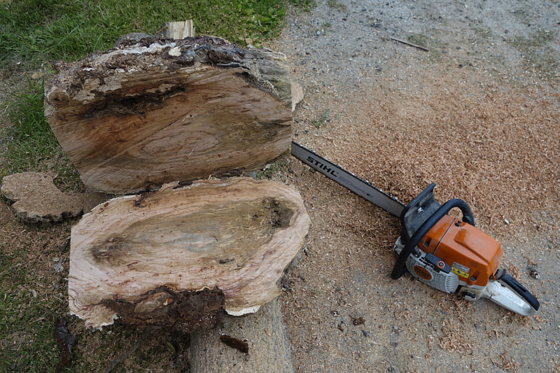 Large cherry burl first cut