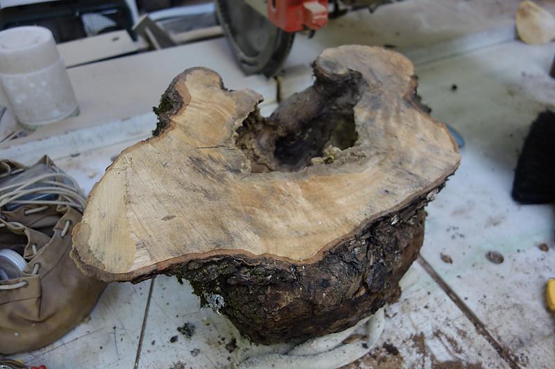 Maple burl uncut1