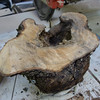 Maple burl uncut1