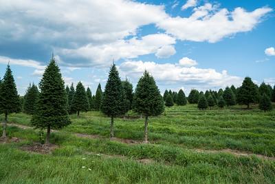 TreeFarm 07569