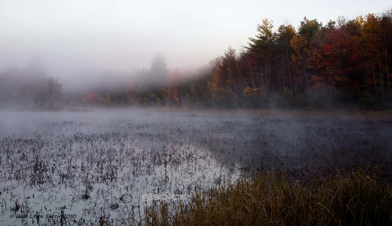 Fog in the Fall