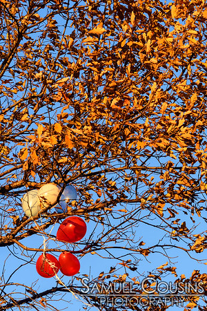 Balloons caught in a tree