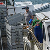 Loading lobster into floating crates for weighing and storage