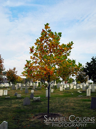 A tree in the old Eastern Cemetery.