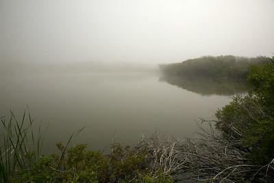 Pond fog C6083