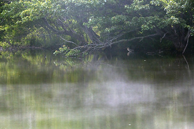 fog C6010