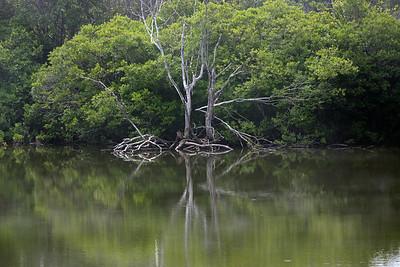 trees C6018