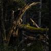 A picturesque tree broken tree trunk.