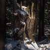 A picturesque broken tree trunk.