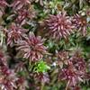 Sphagnum moss in Autumn.
