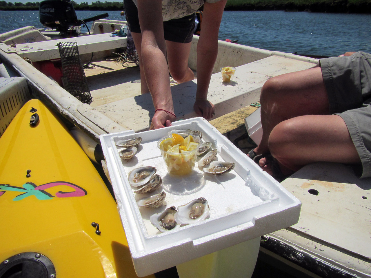 Oysters 3372