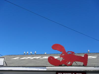 Lobster 3335