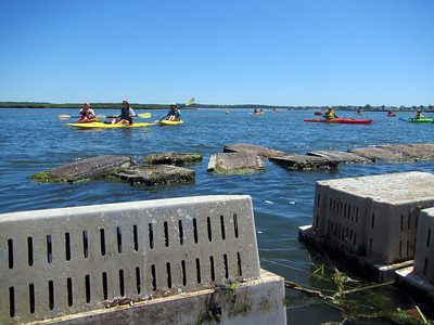Oysters kayaks 3364