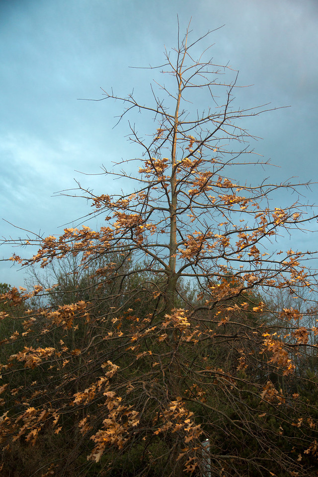 Tree C4632