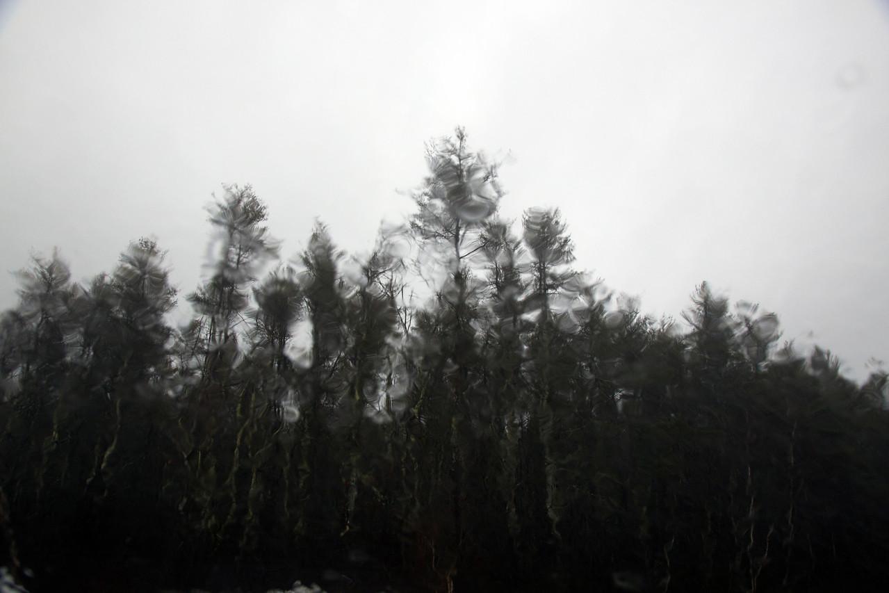 Trees rain C4610