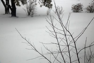 branches snow C4204