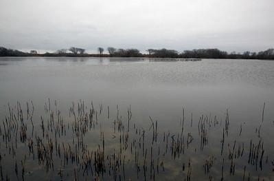 Pond C4134