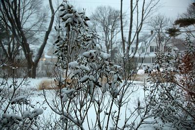 snow C4198