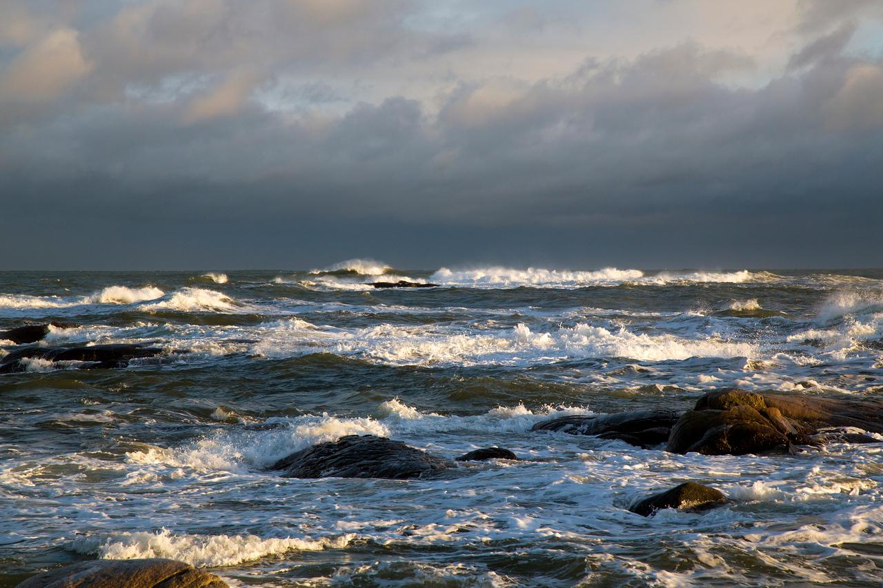 Waves C4462
