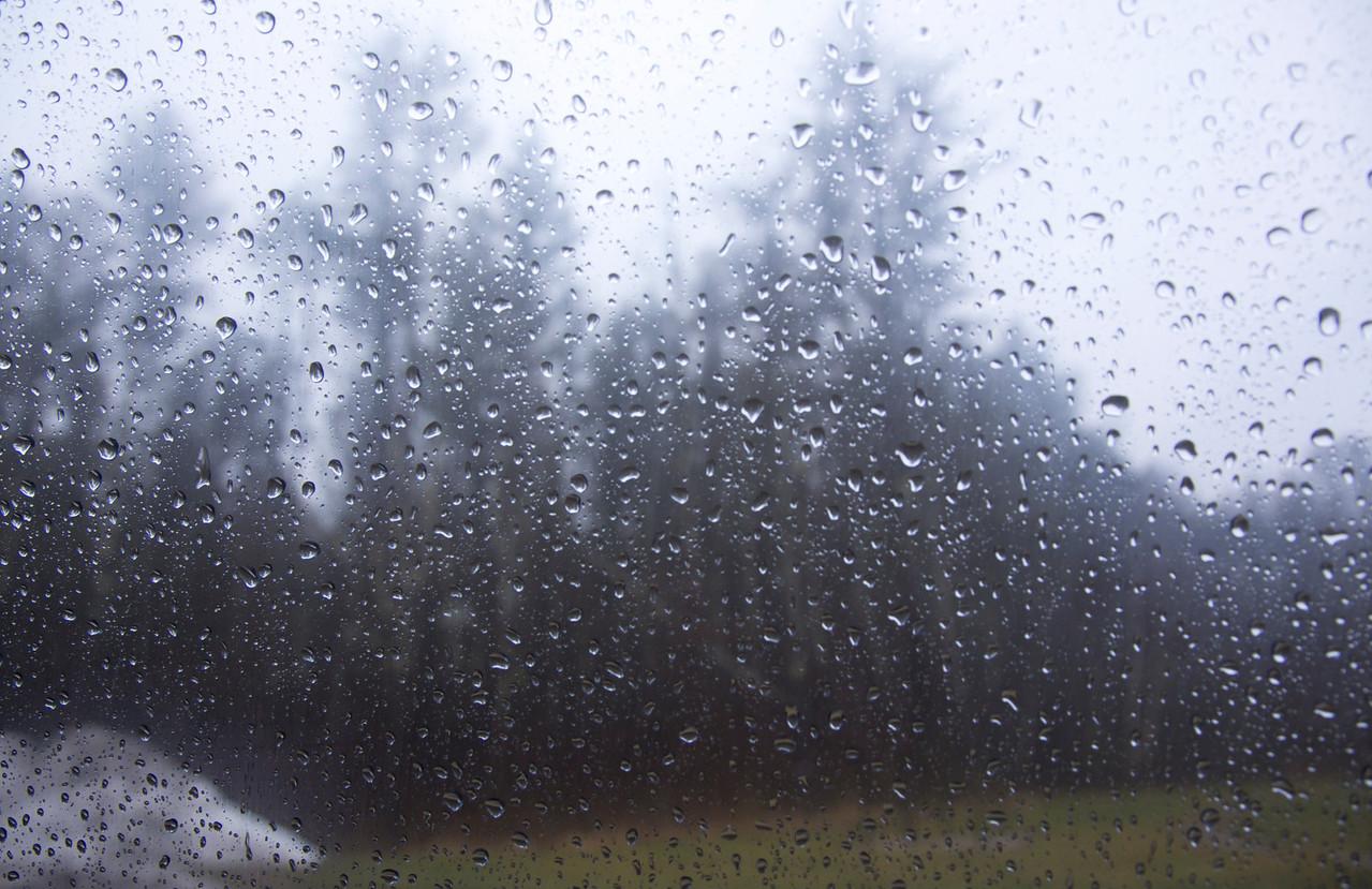 Trees snow rain C4615