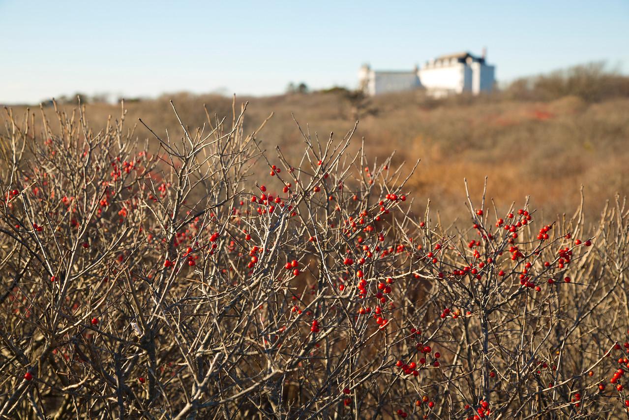 berries C4943